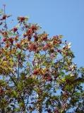 Nejkrásnější období roku v Jizerkách začíná.....